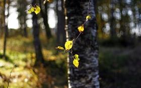 Картинка лес, солнце, свет, свежесть, блики, ветка, весна