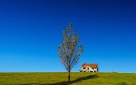 Картинка небо, трава, дом, дерево, холм