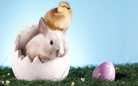 Обои трава, яйцо, кролик, пасха, цыпленок, happy easter