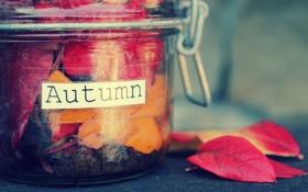 Картинка осень, листья, надпись, баночка