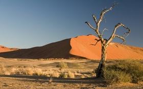 Обои дерево, пустыня, травы, пески, сухое
