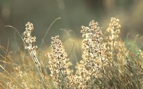Картинка блики, роса, поле, Утро, свечение, растения, свет