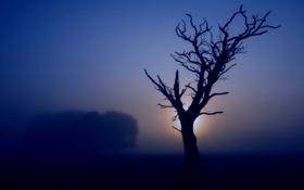 Обои деревья, природа, туман, фото, дерево, настроение, пейзажи