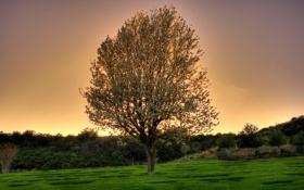 Картинка природа, дерево, цвет, весна