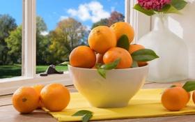 Обои листики, окно, мандарины, миска