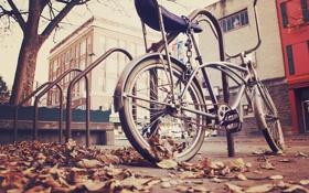 Обои осень, велосипед, город, улица, листва, цепь, парковка