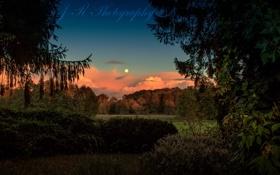 Картинка лес, поляна, сумерки