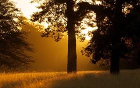 Обои деревья, пейзаж, утро