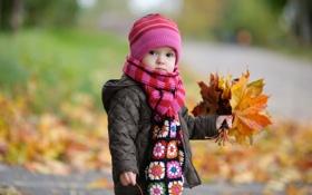 Обои осень, шапка, букет, шарф, куртка, ребёнок, кленовые листья