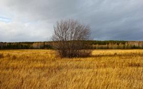 Обои поле, лес, Дерево