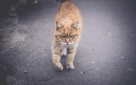 Картинка кот, морда, котяра, кошак, взгляд