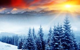 Обои лес, солнце, снег, ёлки, сопки