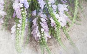 Обои цветы, букет, flowers, bouquet