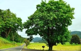 Картинка дорога, зелень, поле, деревья, горы, природа
