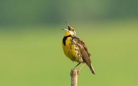 Картинка птица, цвет, перья, клюв, столбик