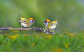 Обои птицы, природа, фон