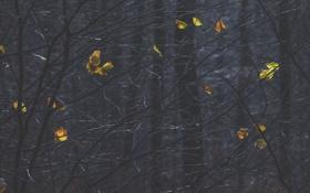 Обои листья, лес, ветки, деревья