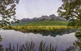Картинка ветки, зелень, озеро, Новая Зеландия, кусты, деревья, Mirror Lakes