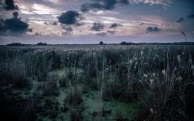 Обои ночь, природа, болото