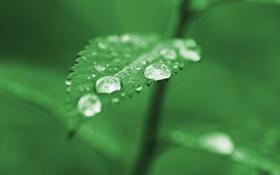 Картинка капли, green, зелень, листок, дождь, зеленый, лист