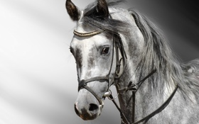 Обои eyes, horse, head