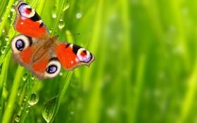 Картинка капли, макро, природа, роса, бабочка, воды, macro