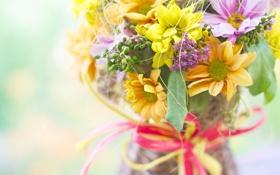 Картинка цветы, букет, бантик, хризантемы, композиция
