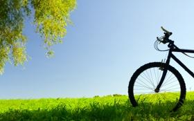 Обои трава, листья, деревья, природа, фон, дерево, настроение