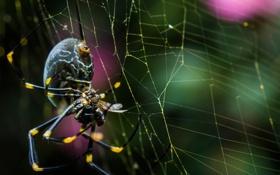 Картинка муха, паутина, паук
