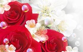 Обои цветы, пузыри, bubbles, цветочки, flowers, розы красные, roses are red