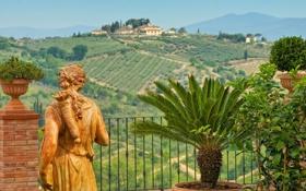 Обои пальма, поля, Италия, статуя, Italy, вазы
