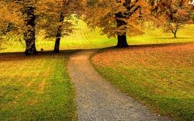 Обои трава, листья, деревья, природа, дорожки, дорожка, красивые обои для рабочего стола