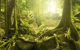 Обои лес, солнце, деревья, загадочный, тропические, Mystic wood