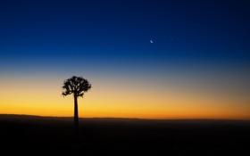 Обои небо, закат, дерево, звезда, вечер, силуэт