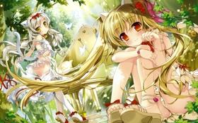 Картинка природа, девушки, рояль, кошачьи уши, кошачий хвост, Fujima Takuya