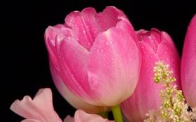 Картинка капли, роса, тюльпан, лепестки