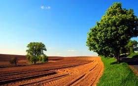 Картинка дорога, поле, небо, деревья, природа, весна