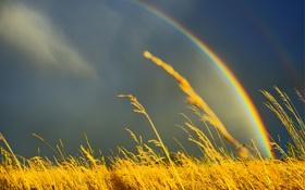 Картинка поле, небо, трава, природа, радуга, колосистая