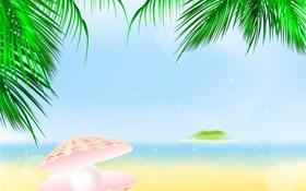 Обои palm, shell, жемчужина, пальма, sand, море, песок
