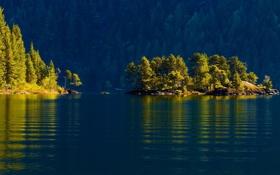 Обои лес, вода, деревья, Канада, Canada, островок, Cowichan Lake