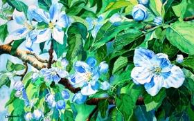 Обои листья, голубой, зеленый, цветы