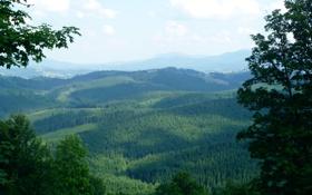 Обои говерла, фото, карпаты, лето, природа, лес