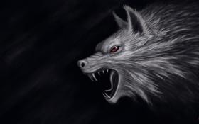 Обои темный фон, волк, голова, арт, пасть, красные глаза, Olah Marin