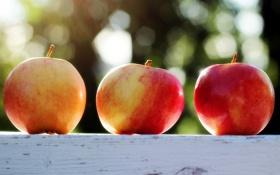 Картинка еда, Bokeh, Apples