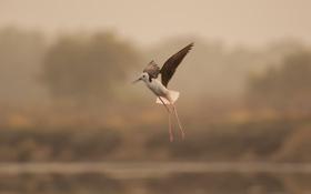 Картинка природа, птица, размытость