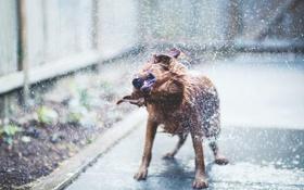 Обои вода, собака, dog, терьер