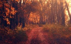 Картинка осень, листья, солнце, деревья, способ