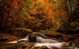 Картинка осень, лес, листья, вода, деревья, природа, река