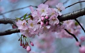 Картинка природа, ветка, весна