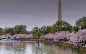 Картинка деревья, пруд, парк, весна, Вашингтон, США, цветение